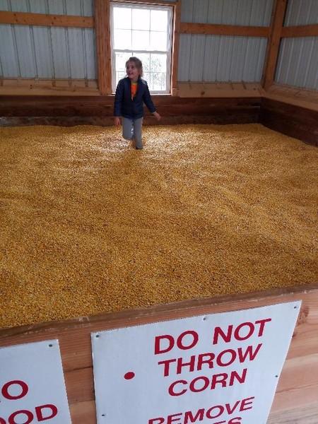 Shyrock's Corn Maze