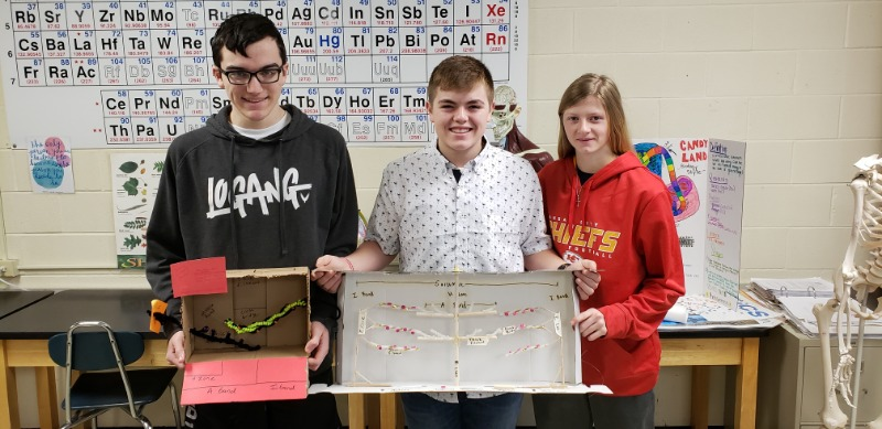 Anatomy Students Created Sliding Filament Models of Muscular Contraction