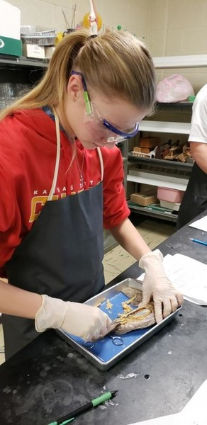 Ecology Students Dissect Perch